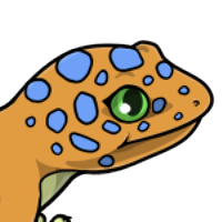 """Spotted Head"" female mutation of Gekko"