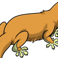 """Solid Platypus Body"" female mutation of Gekko"