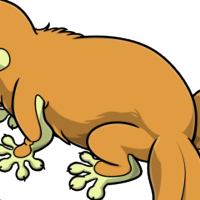 """Solid Platypus Body"" male mutation of Gekko"