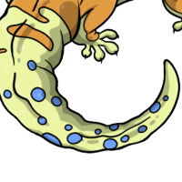 """Carrot Leopard Gecko Tail"" female mutation of Gekko"